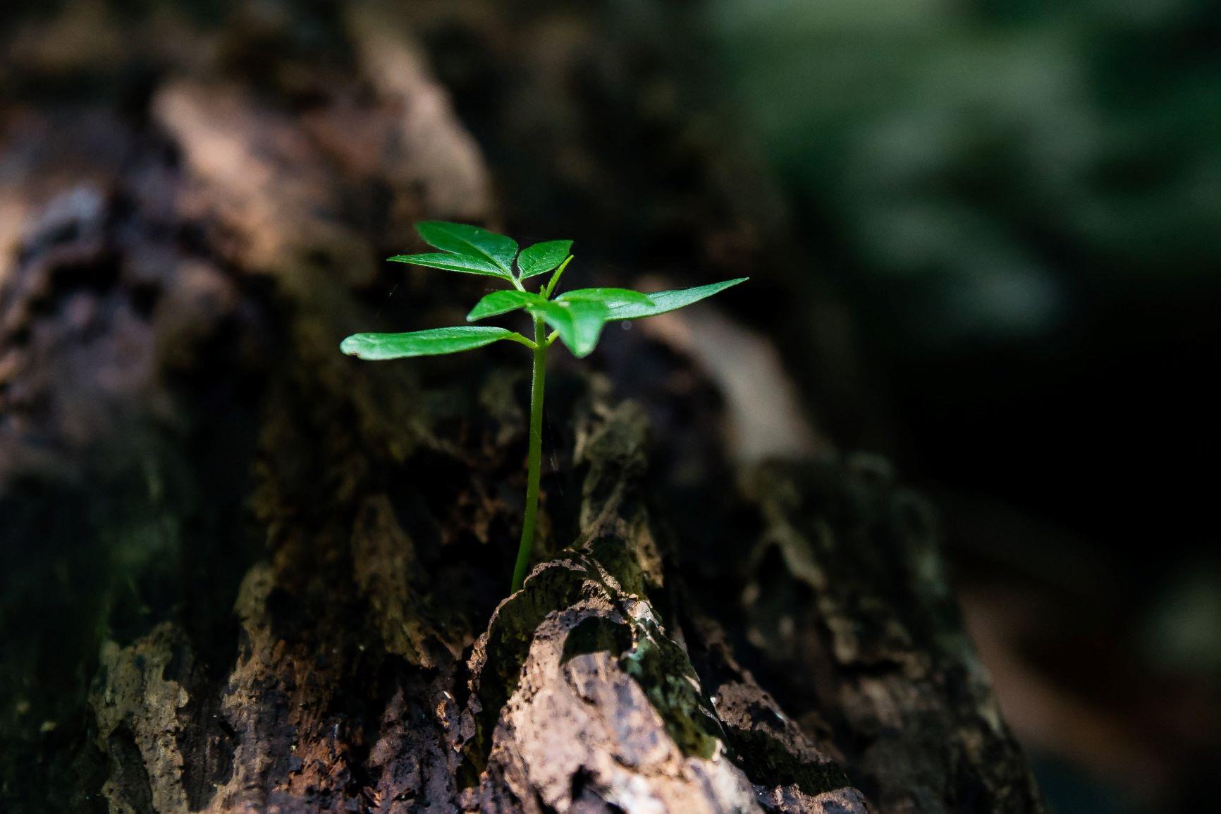 Grow Adjacently